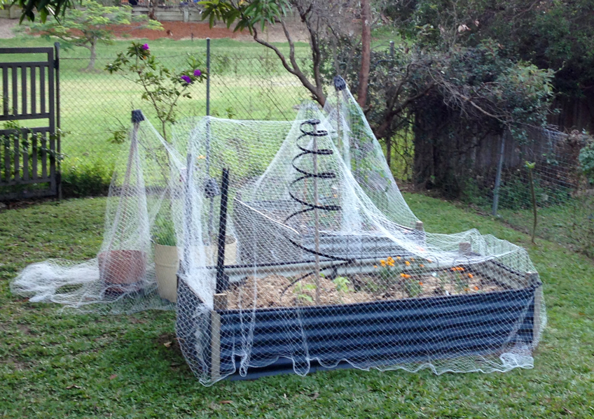 Veggie Patch Possum Protection