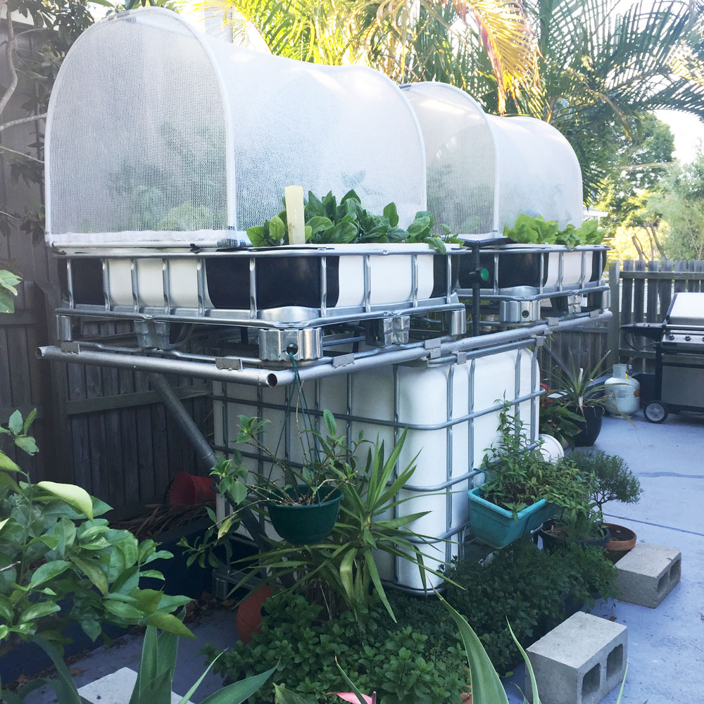 vegepod system on the aquaponics