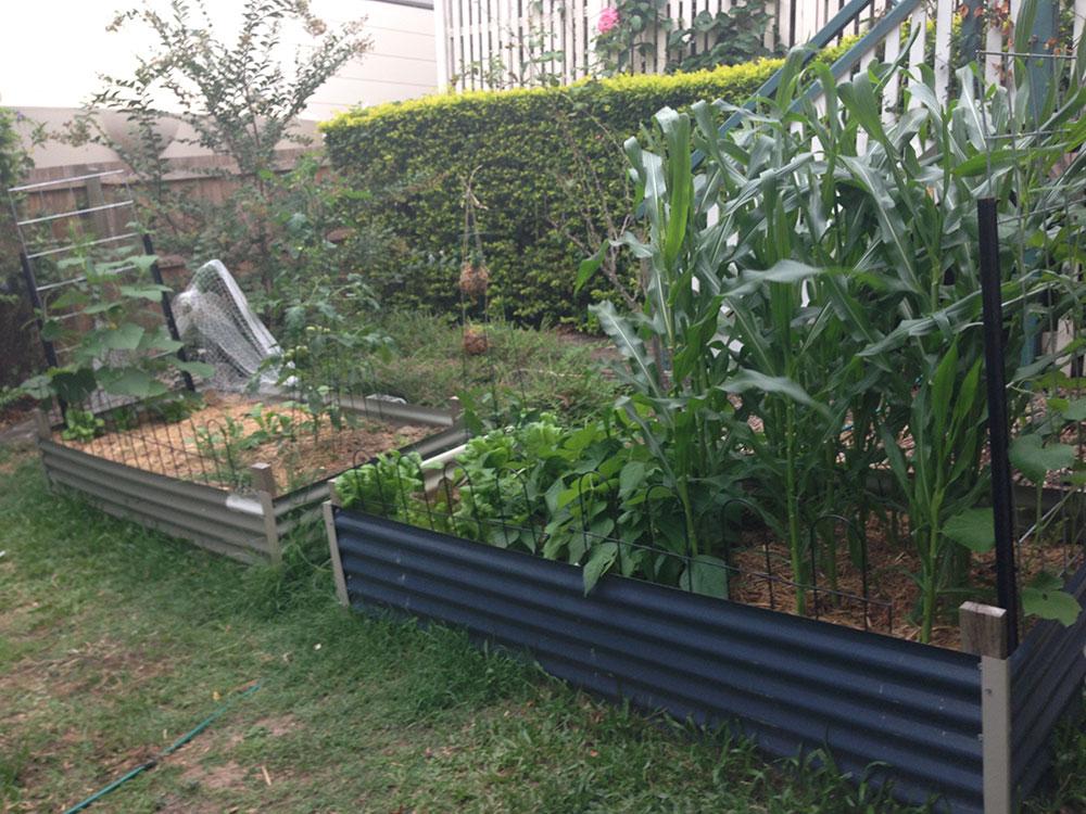 Week 5 Garden update