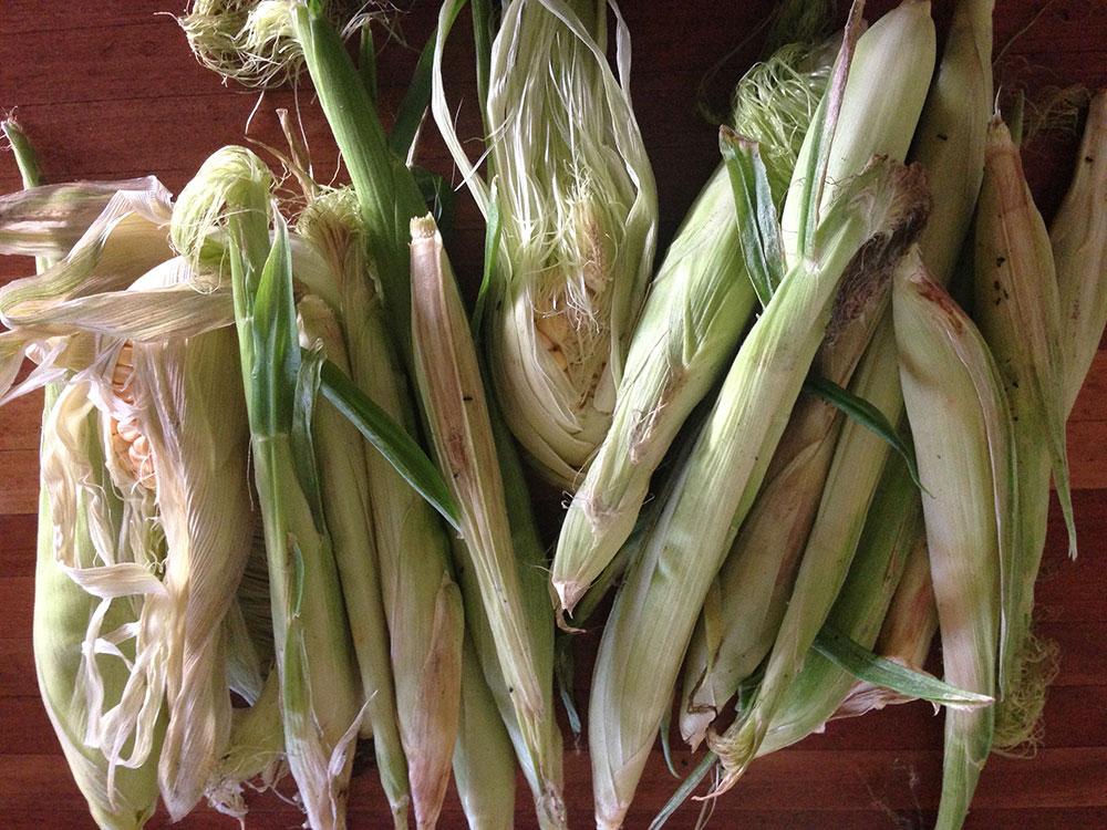 Corn Failure