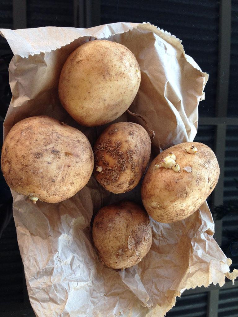 Organic Sebago Seed Potatoes