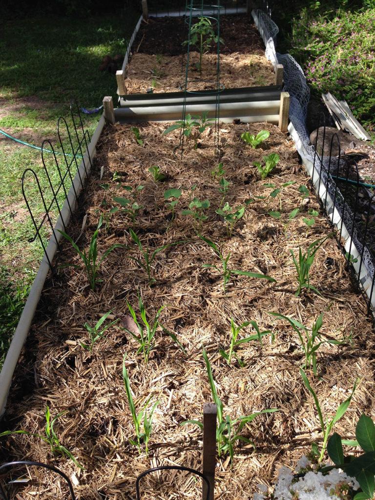 Week 1 Garden Update