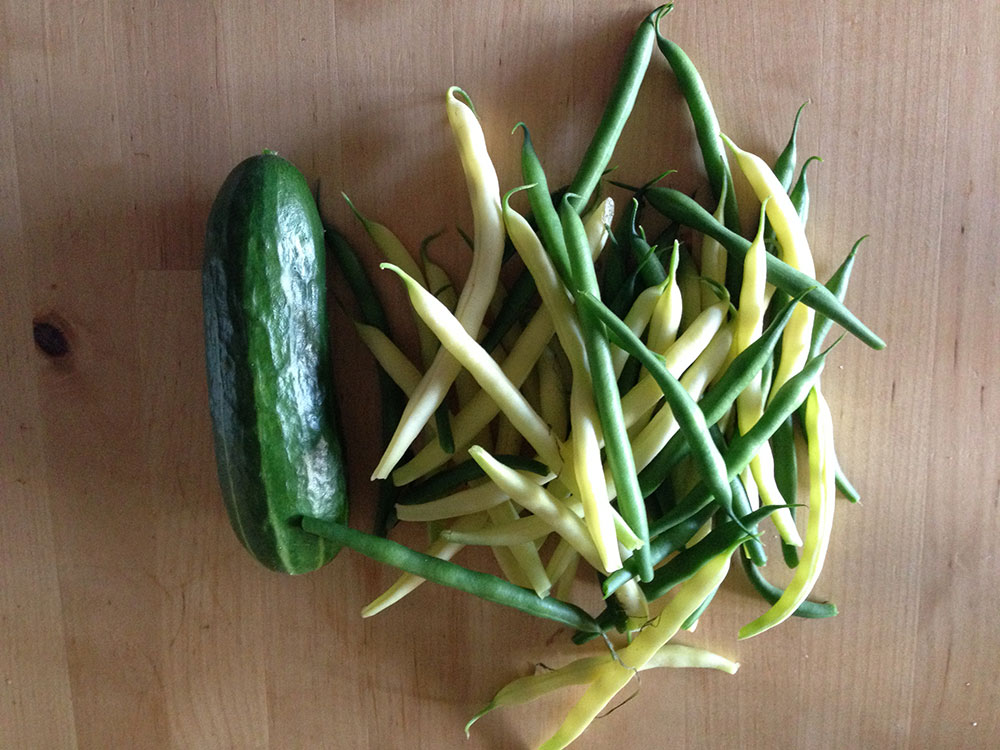 Week 7 Harvest Butter beans french beans cucumbers