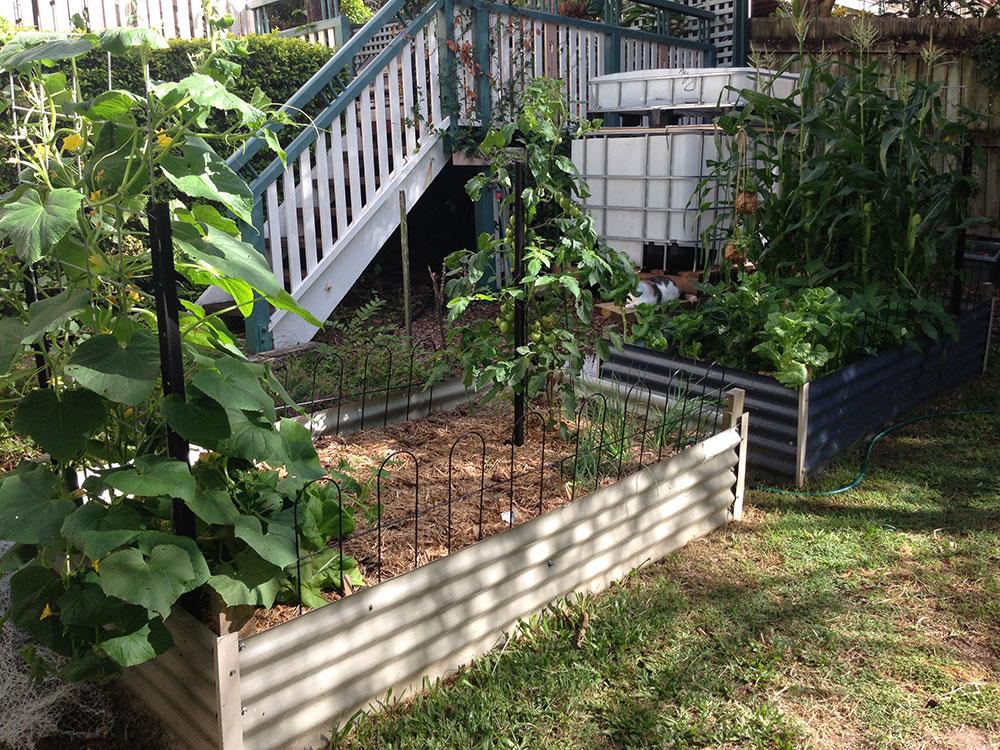 Week 7 Veggie Garden Update