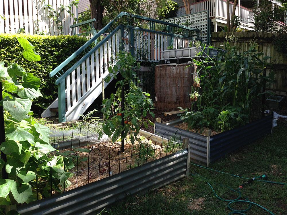 Week 8 - Roma Tomato Plant