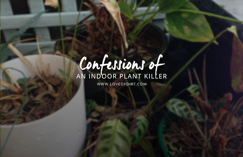 Confessions of An indoor Plant Killer