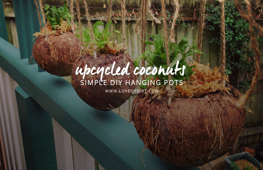 Upcycled Coconuts