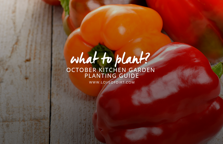What to plant in the vegetable garden october