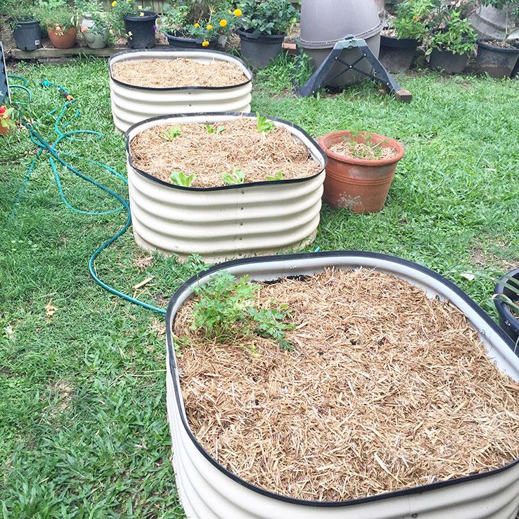 New gardens!