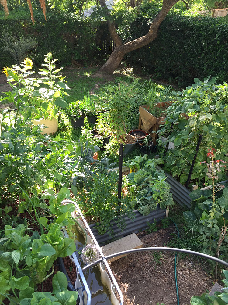 vege-gardens-out-of-control