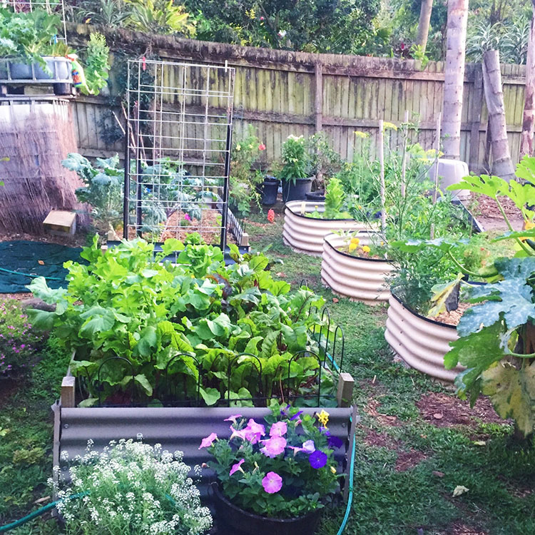 Renting with Veggie Patches