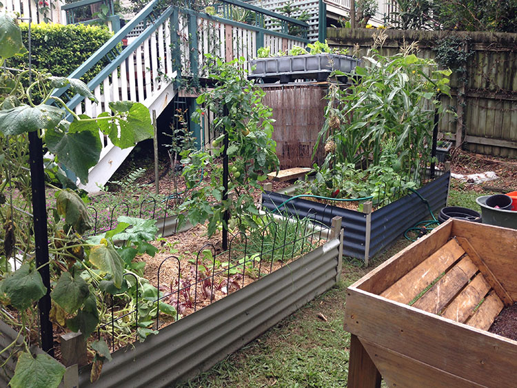 Addition of the aquaponics (top right)