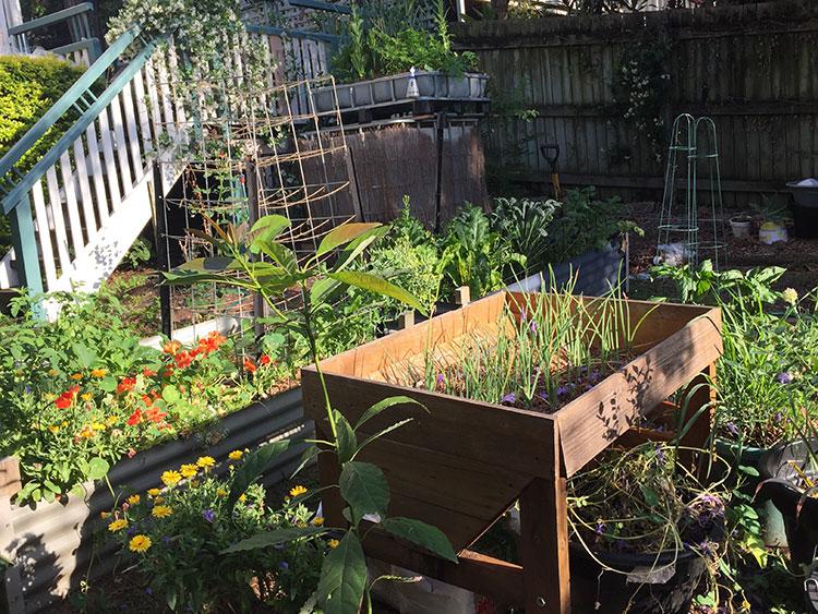 Veggie garden while renting