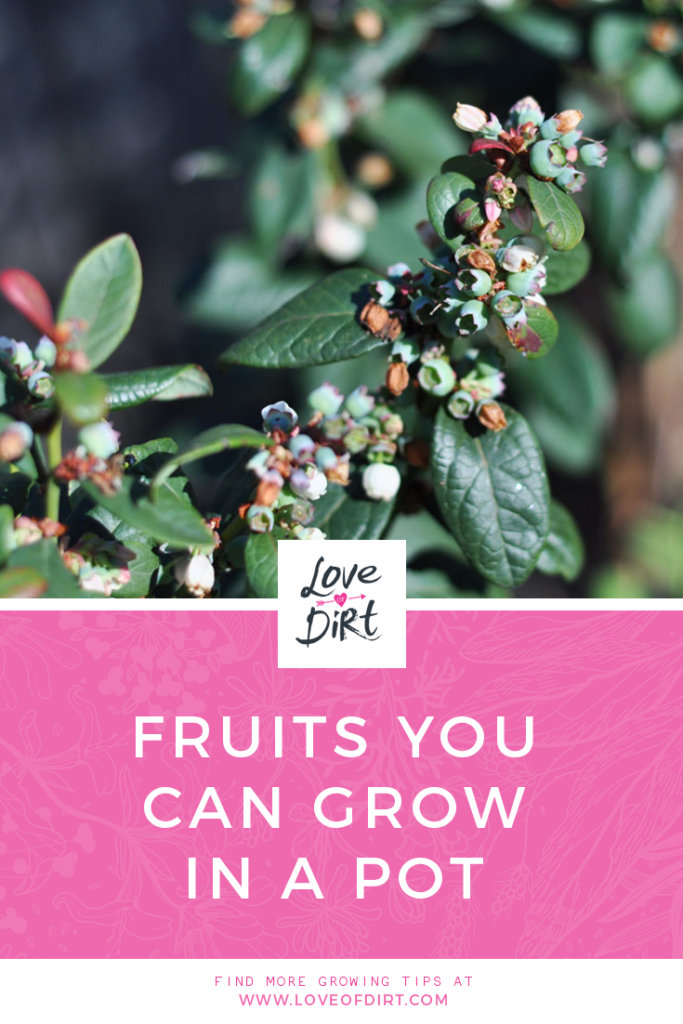 What fruits can you grow in a pot?