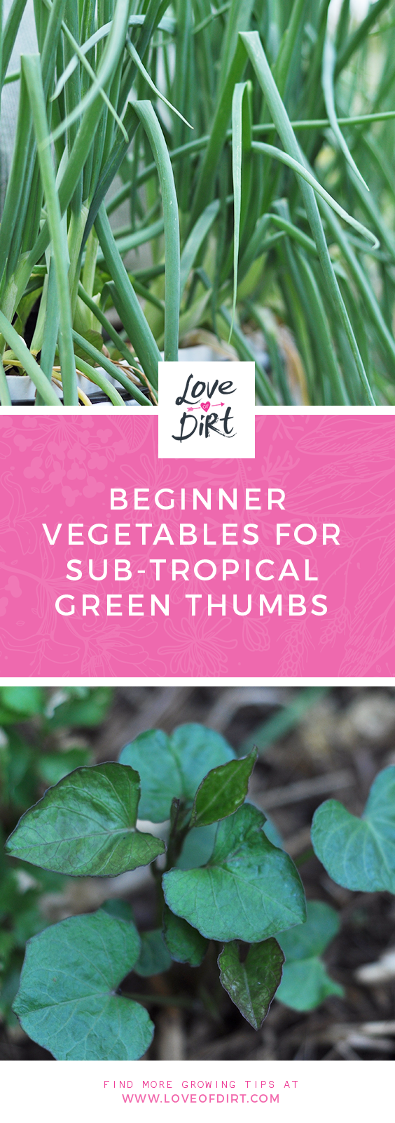 Beginner Vegetables to grow for sub-tropical green thumbs