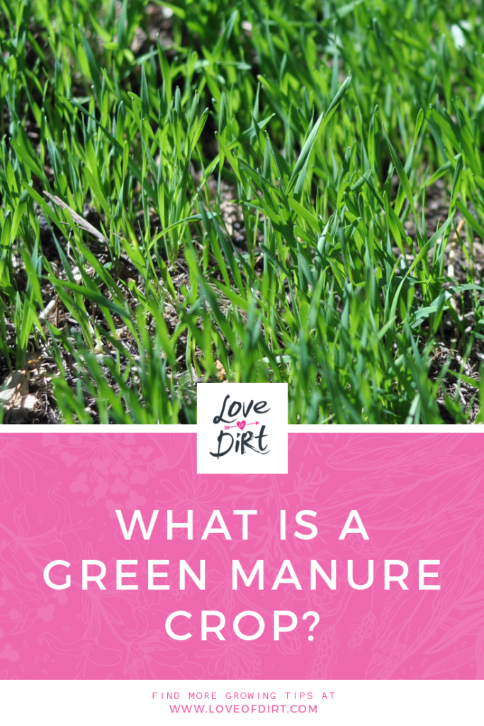 What is a green manure crop?