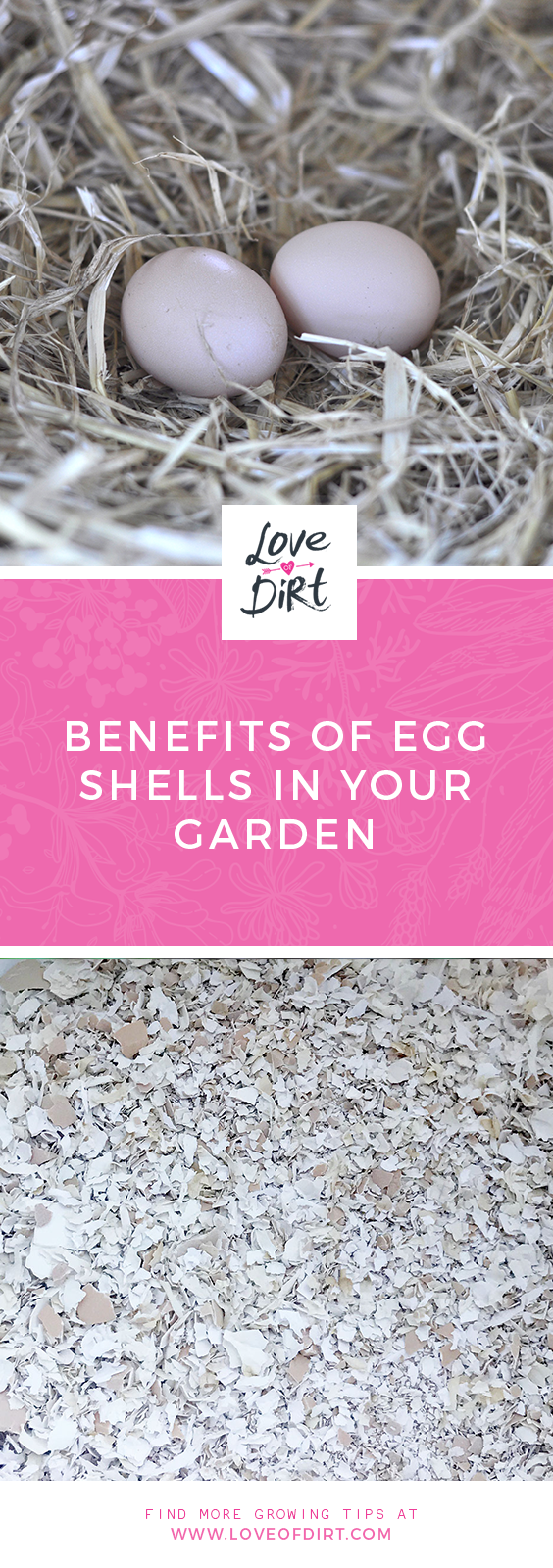 Benefits of Egg Shells in your veggie patch