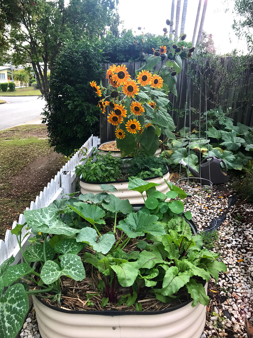 Spring Garden Update Front Garden