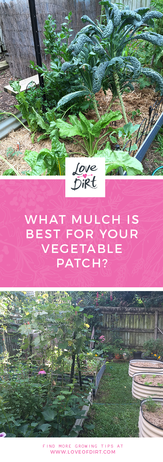 What mulch is best for your vegetable patch?