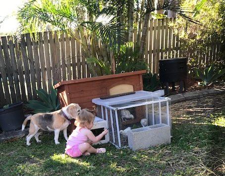Raising Day Old Chicks