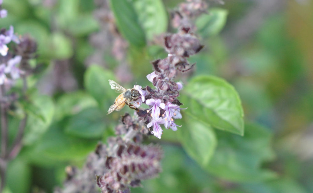 Bringing bees to your garden