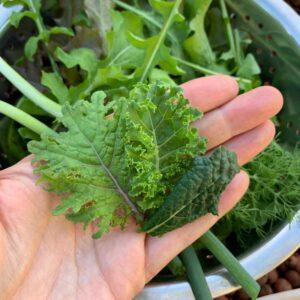 Kale Colour Mix Seeds