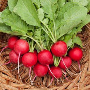 Cherry Belle Radish Seeds