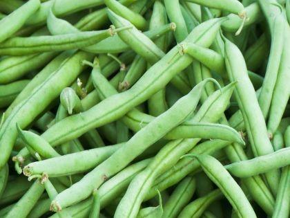 Bush Bean Strike