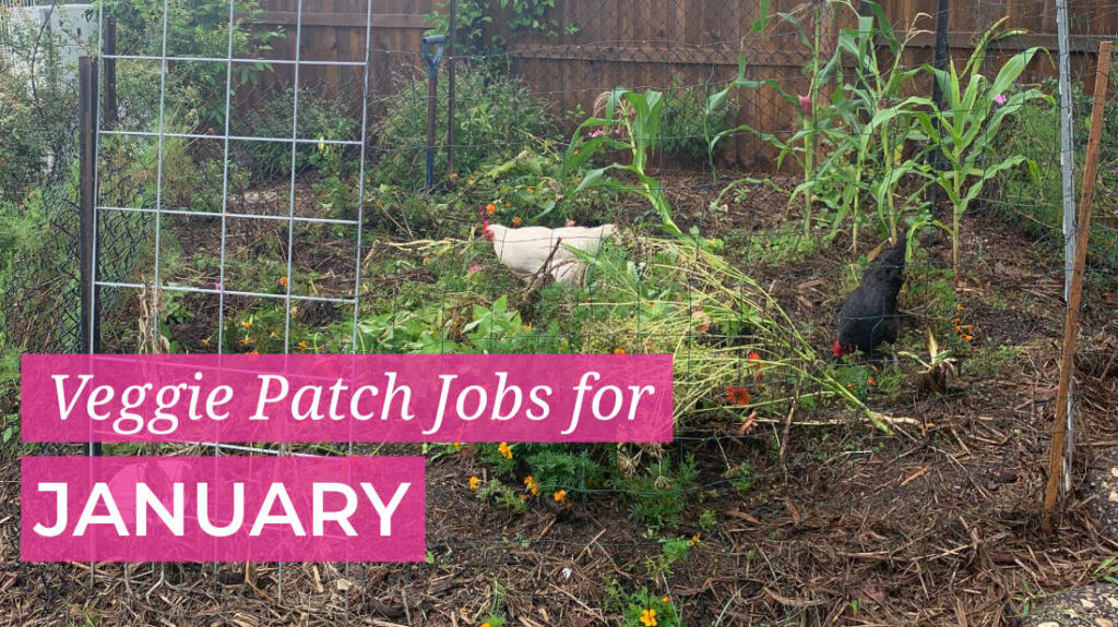 January Veggie Patch Jobs
