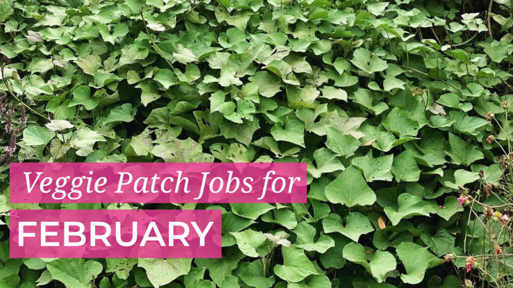 Things to do in your veggie patch this February