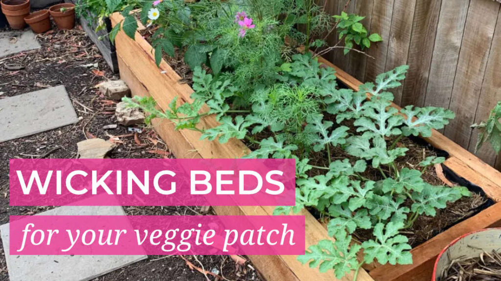 Wicking Beds for your Veggie Patch