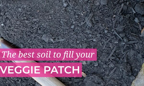 Best Soil for the veggie patch