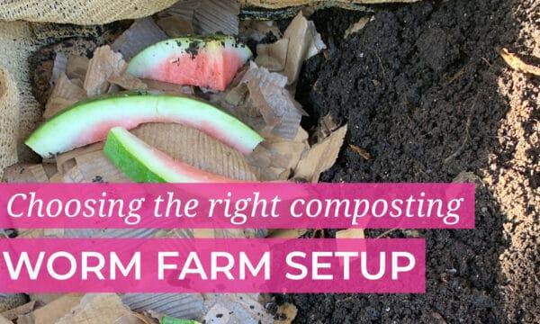 Best Composting Worm Farm Setups