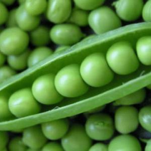 Greenfeast Pea Seed
