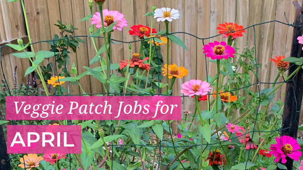 Veggie Patch Jobs April