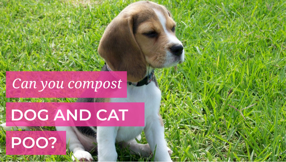 Can you compost Dog and Cat Poo