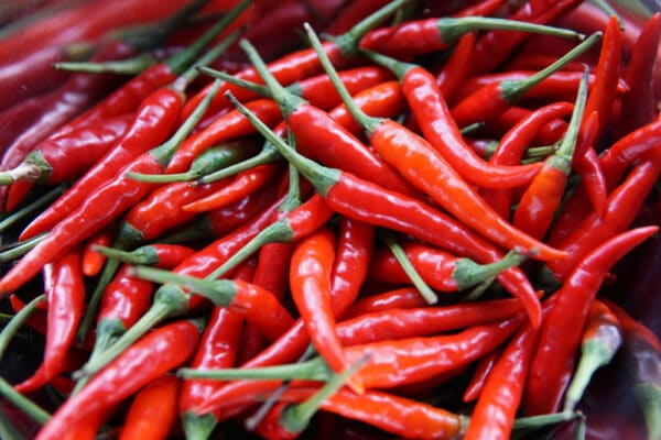 Chilli Cayenne Red Seeds