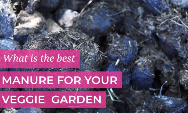 Best manure for your veggie patch