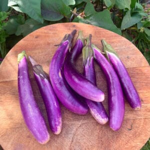 Ping Tung Eggplant Seeds for Sale
