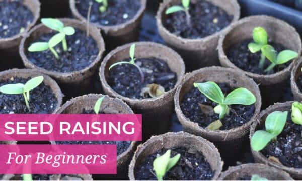 Seed raising for beginners
